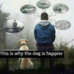 Dog is happier.png