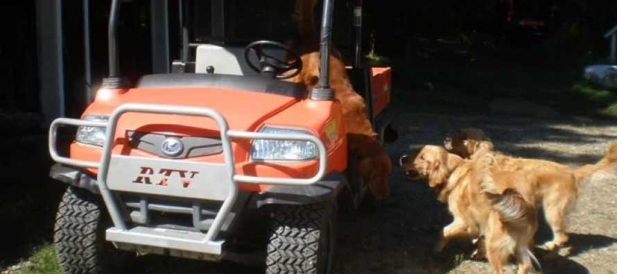 Pets and Tractors