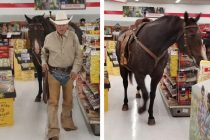 Tractor Supply Allows Leashed Pets – So This Guy Brought His Horse In!